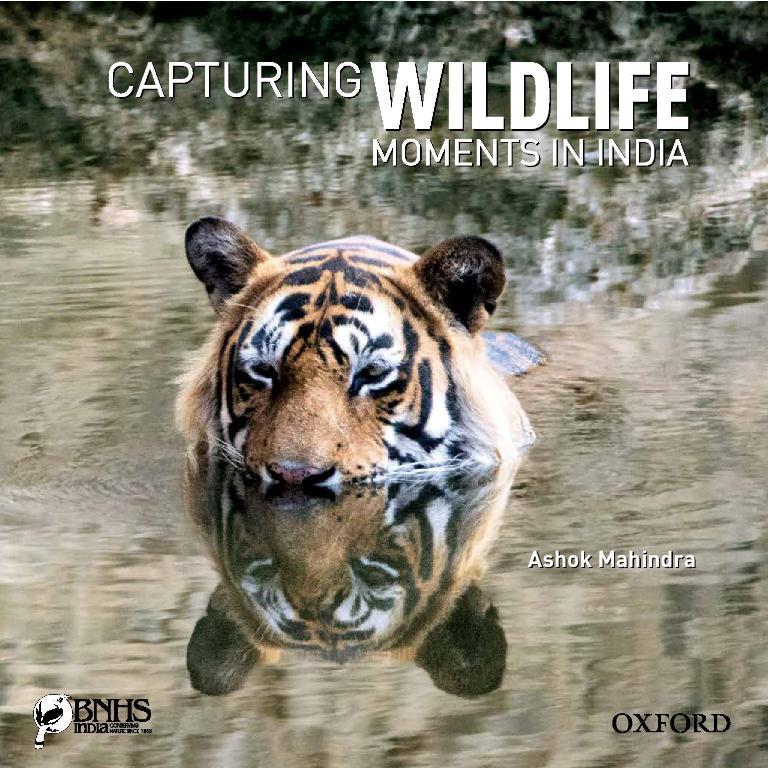 Ustad,Bengal Tiger,Ranthambhore,Rajasthan