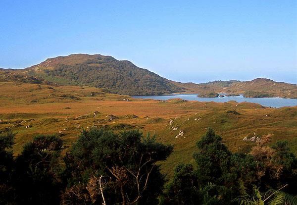 Glencanisp woodlands, Loch Druim Suardalain