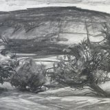 D5 Thorn Trees 1999 charcoal 59x41cm £300