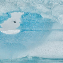 11 MP272 Tern through the Iceberg