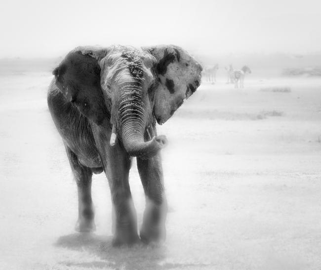 Elephant in Dust Storm mono