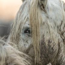 Horse  Detail