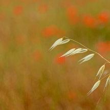 Provence France July 2014-0097