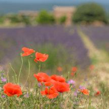 Provence France July 2014-0134