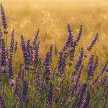 Provence France July 2014-0446