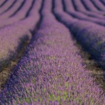 Provence France July 2014-0911