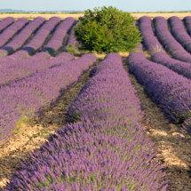 Provence France July 2014-0923