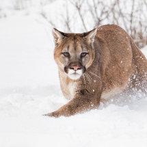 Puma 2b