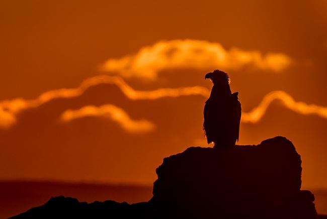 Stella Eagle Sunrise (2)