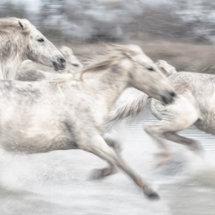 White  Horse  Stampede  2