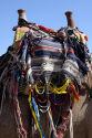 Camel saddle
