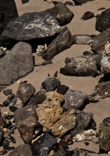 Butterfly on Rocks