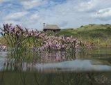 common sea lavender and the Hut
