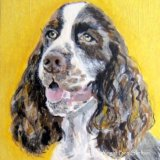 English Spriinger Spaniel SOLD