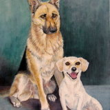 German Shepherd and Jack Russell SOLD