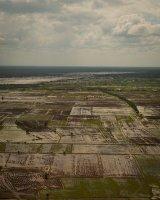 Rice Paddies, Cambodia