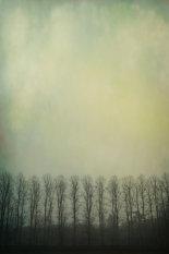 trees-in-mist-©benjaminharte