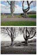 Springfield Park 2011 & 1986