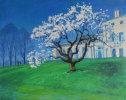 Magnolia tree by Kenwood house