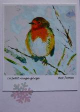 White robin card