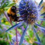At Hardwick Hall Gardens Derbyshire 2015