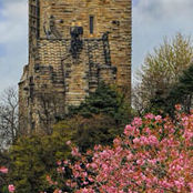 CP10 Wallace Monument Stirling seen above the cherry blossom in Riverside.
