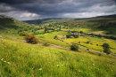 Summer Meadow - Muker