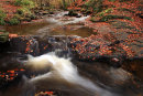 May Beck Autumn
