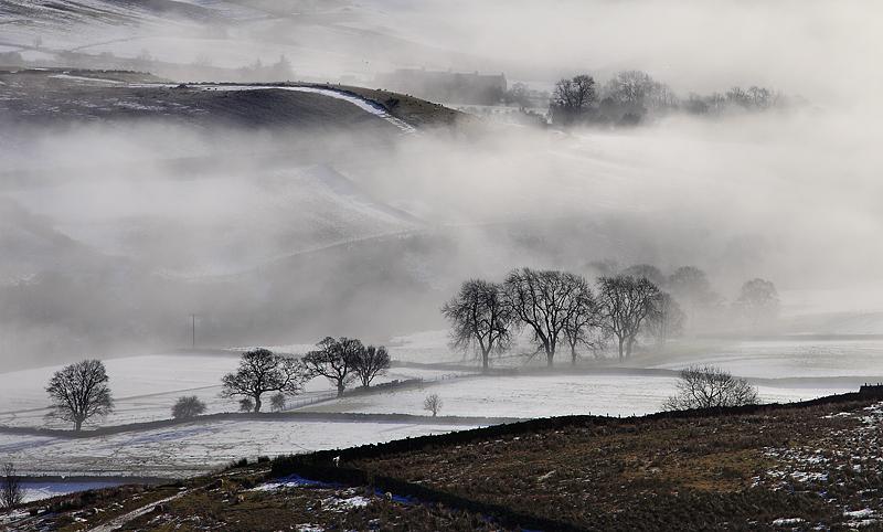 Misty Morn Rosedale