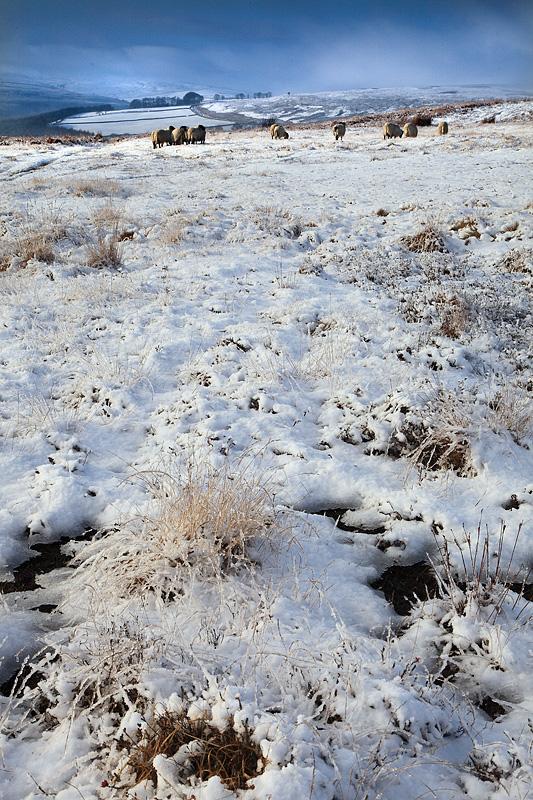 Commondale Winter 2