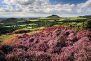 Roseberry Heather 3