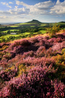 Roseberry Heather 5