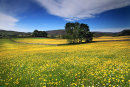 Summer Meadows 4