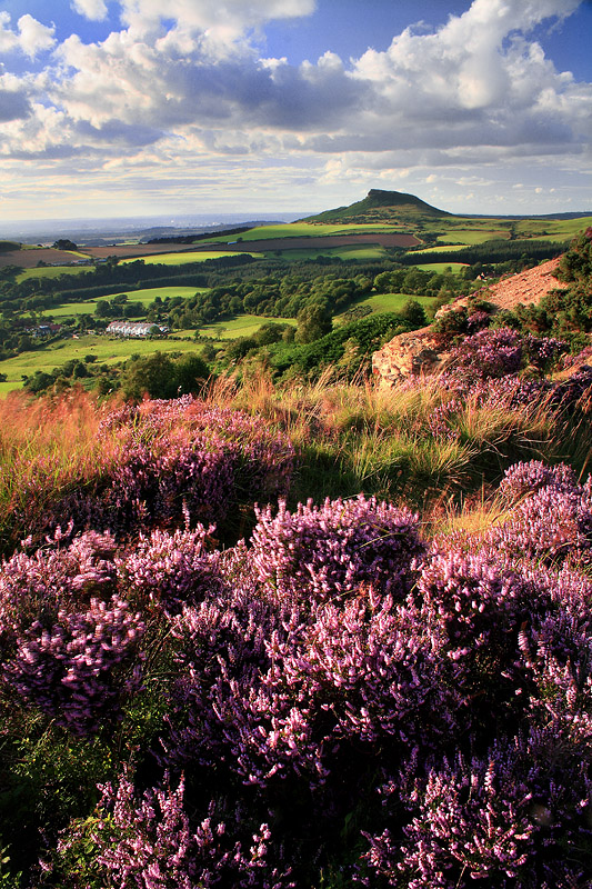 Roseberry Heather 6