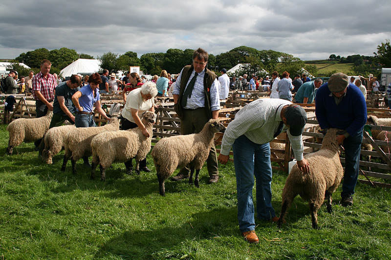 Judgement Day - Danby Show