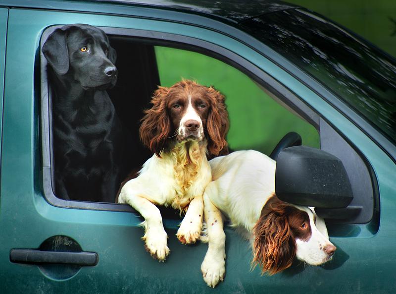 Farndale Dogs