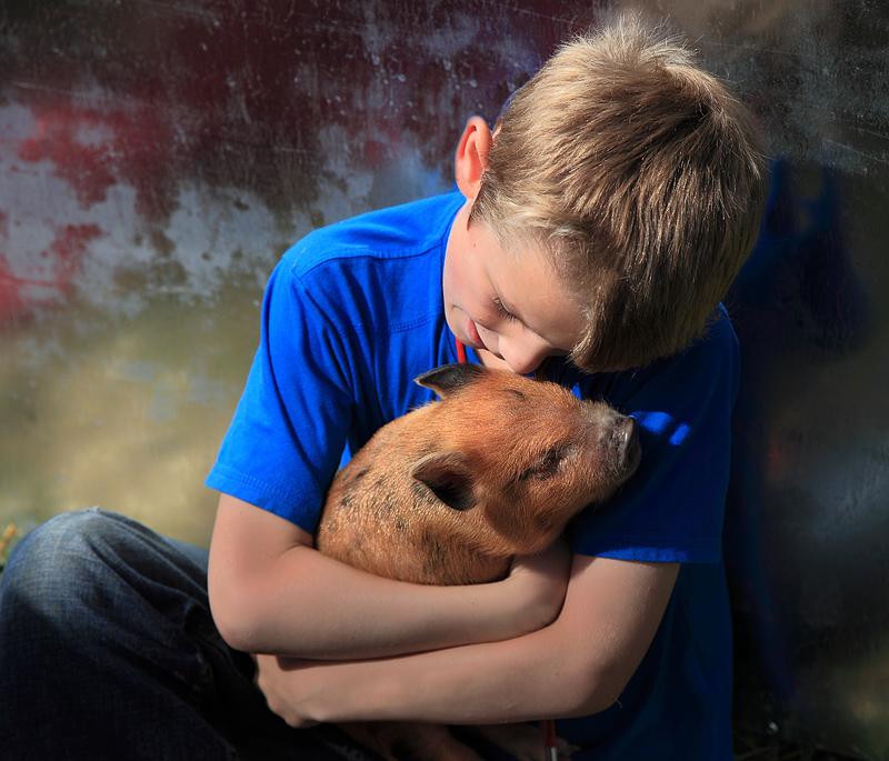 Pet Pig - Egton Show