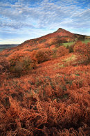 Roseberry Autumn