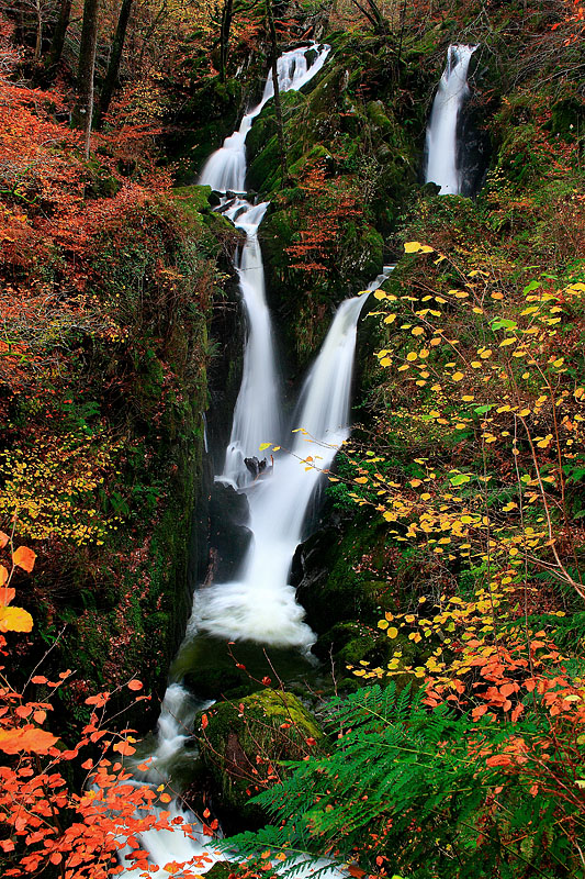 Stock Ghyll Force 1