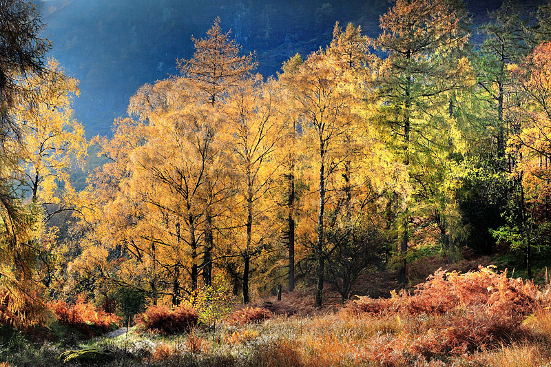 Autumn Borrowdale