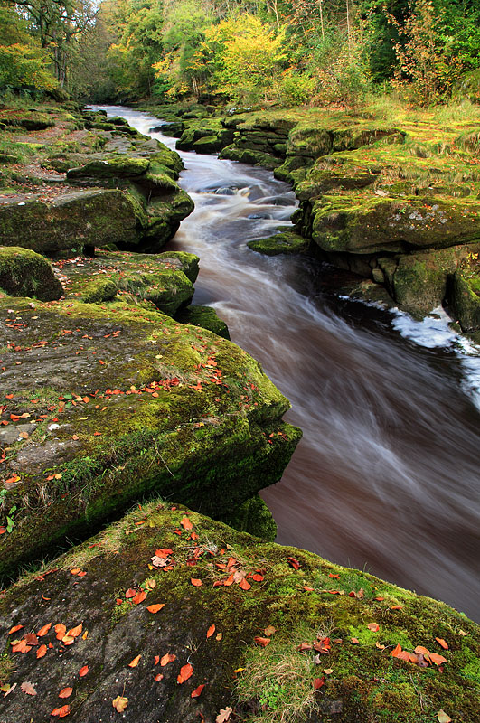 The Strid - Autumn