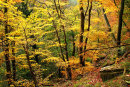 Autumn Woods 3