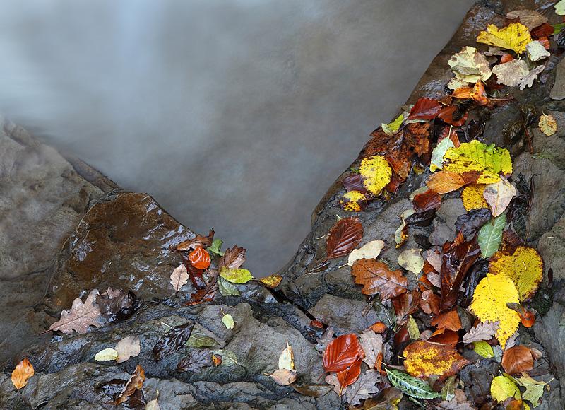 Autumn Fall 2