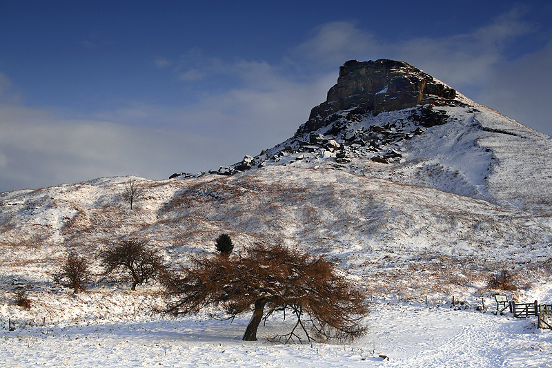 Roseberry Winter Tree 2