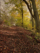 Autumn in Brantingham Woods