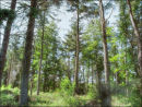 Langsett Forest