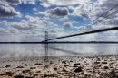 Swans at Humber Bridge