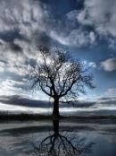 Wintering Oak Tree