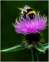 open val clark busy bee