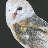 Barnaby Owl